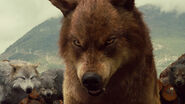 Werewolves-TheTwilightSaga