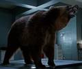 Mutant Bear (Zoo)