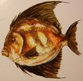 Sicklefin (Sicililepis minimus)