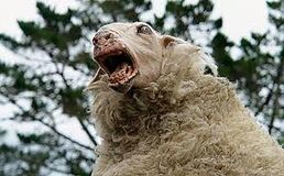 Killer mutant sheep