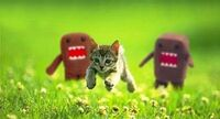 Kitten chased by grues
