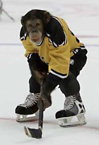 Ice hockey monkey