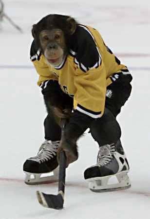 Plik:Ice hockey monkey.jpg