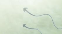 Latające Ayakashi