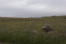 Nólsoy - północny krajobraz