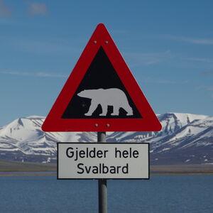 NO-spitzbergen-eisbaer-schild