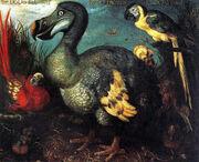 Edward's Dodo