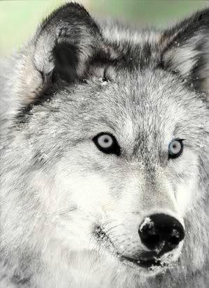 File:Cassiewolf.jpg