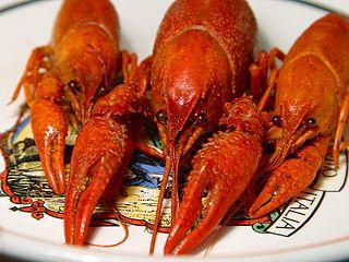 File:Crayfish.jpg