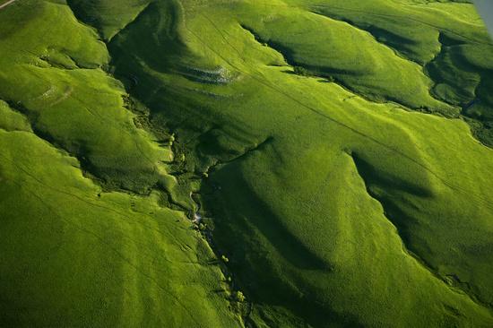 File:Tallgrass overhead.jpg