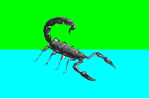 New flag of Scorpionia