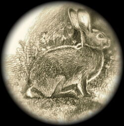 Laughlin Rabbit