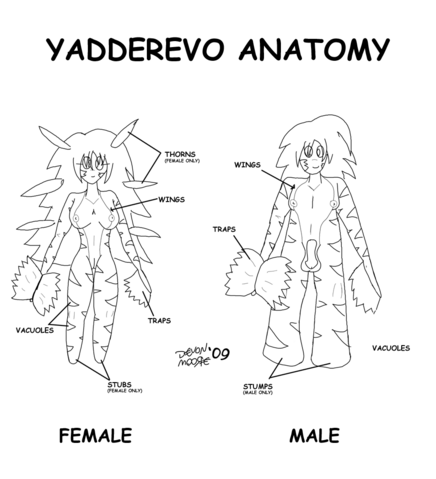 File:Yadderevo Anatomy.png