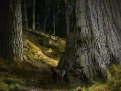 Nordanskogen