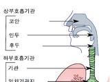 기관(호흡기관)