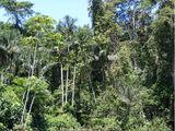 열대우림기후