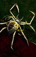 Spider phase