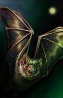 Animal bat