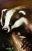 Animal badger
