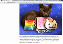 Nyan Cat Boy proof