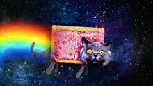 Realistic Nyan Cat Image