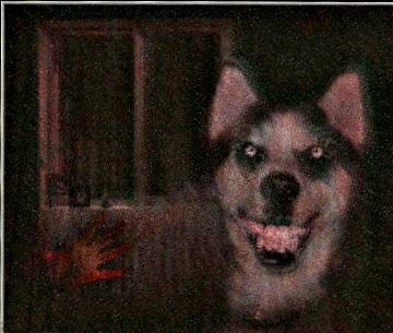 File:Smiledog enhanced.jpg