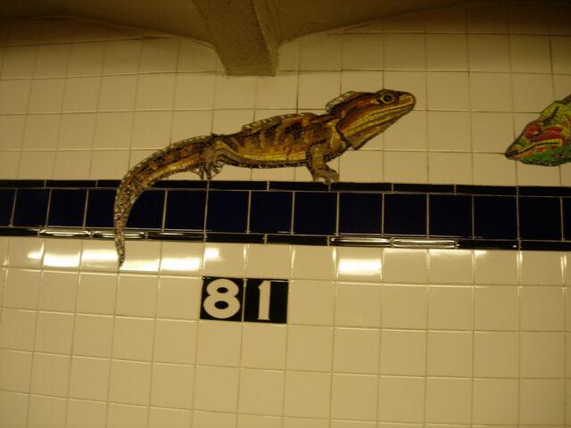 File:81 lizard.jpg