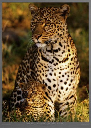 File:Michel-christine-denis-huot-leopard-with-infant-at-masai-mara-kenya.jpg