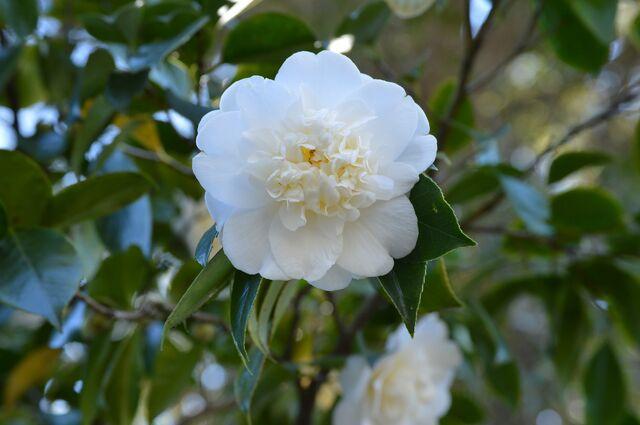 File:Flower-610702 1920.jpg