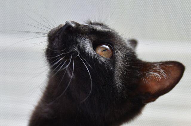 File:Cat-1507603 1920.jpg