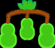 Pears (Body)