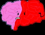 Brain Pose