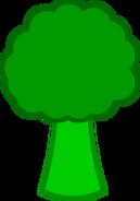 Broccoli body