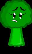 Broccoli New