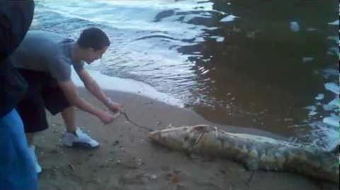 East River Monster Washes Up Below Brooklyn Bridge
