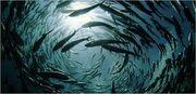 Imagesfish