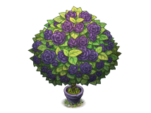 File:Black rose bush.png