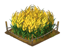 File:Wheat Thumbnail.png