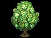File:Green grape vine.png