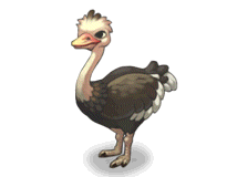 File:Ostrich.png