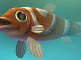 Sol Fish