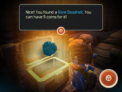 Rare Seashell