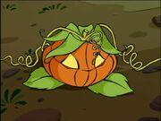 ~Mirta As A Pumpkin~