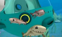 The Cookiecutter Sharks