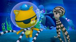 Mimic Octopus (Season 02 - Episode 16).mp4 000548700