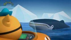 Humpback Whales S03E05.mp4.crdownload 000193720