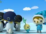 The Emperor Penguins