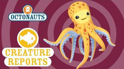 Octonauts- Creature Report - Octopus