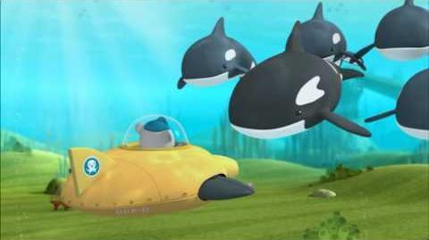 Octonauts - The Orcas