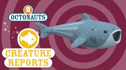 Octonauts Creature Report - Whale Shark